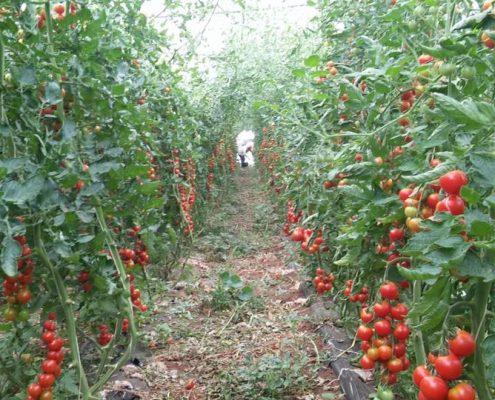 corso biodinamicra orticoltura