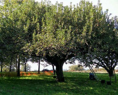 Corso di Frutticoltura Biodinamica
